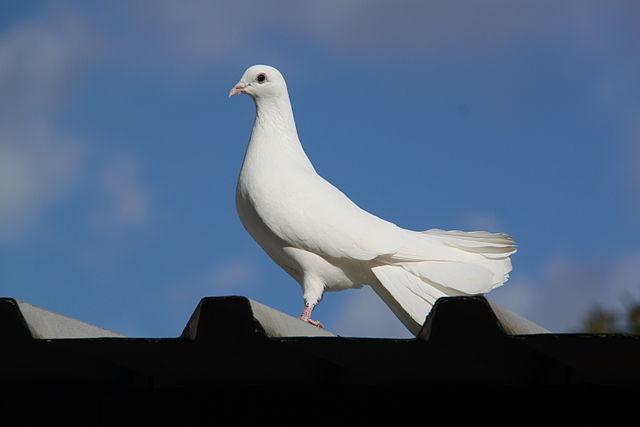 Wybitny Skąd ptaki wiedzą, jak wrócić do domu? - Artykuły naukowe - Portal JF37